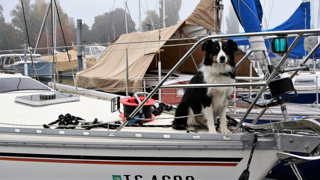 How to Get a Big Dog on a Boat in 2 Simple Steps