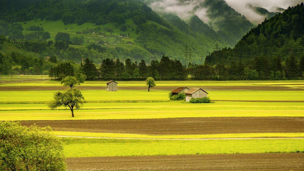 How do I Choose Between a Tiller and a Cultivator?