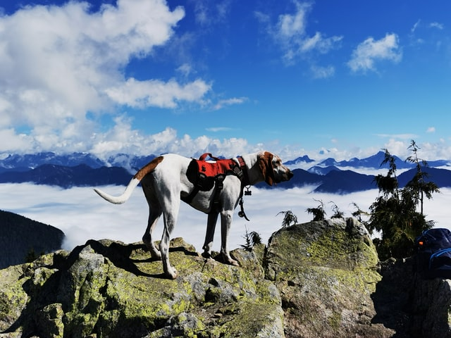 Tips for Training Your Dog for Long Hikes